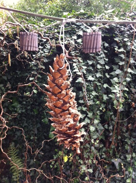 fir cone bird feed